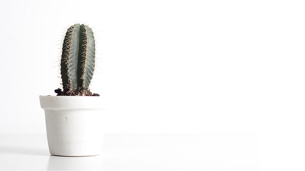 Cactus, White, Background, Green, Simple