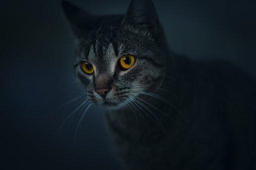 Cat, Robber, Wild, Animal, Eye, Dark, Mystic, Portrait