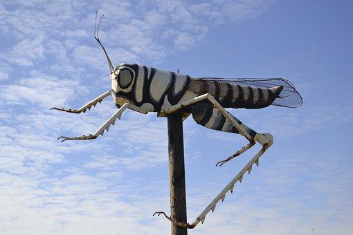 Cricket, Grasshopper, Insect, Wildlife, Locust
