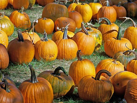 Pumpkins, Autumn, Fall, Halloween, Holiday, Celebration