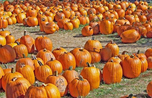 Pumpkins, Autumn, Halloween, Fall, Holiday, Celebration