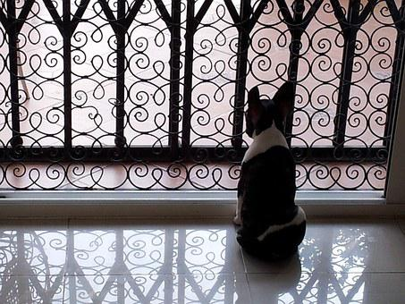 French Bulldog, Dog, Pet, Puppy, Cute, Waiting For You