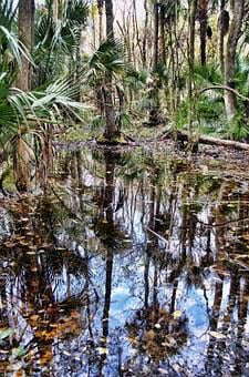 Florida, Highlands Hammock State Park, Jungle, Swamp