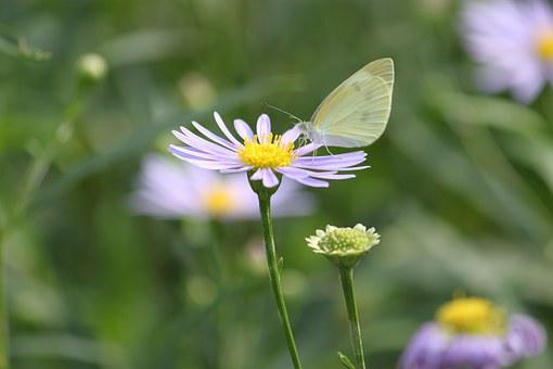 Nature, Butterfly, Summer, Wing, Colorful, Insect, Fly