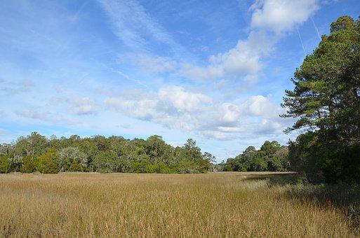 Field, Park, Forest, Marsh, Coastal, Nature, Plant