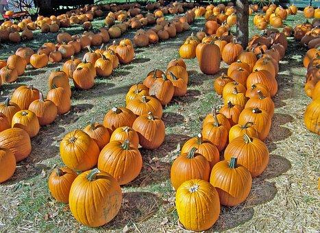 Pumpkins, Autumn, Halloween, Fall, Celebration