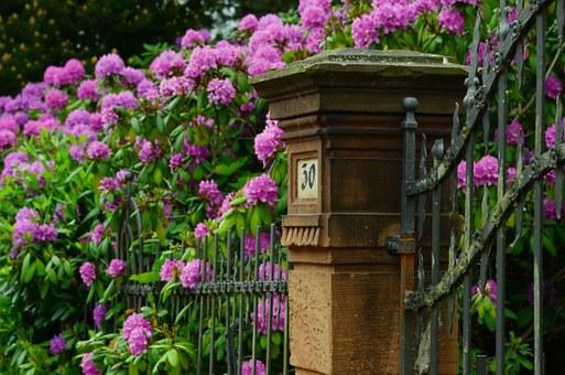 Rhododendron, Garden, Spring, Blossom, Bloom, Colorful