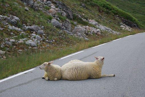 Sheep, Path, Peaceful, Road, Landscape, Serene, Zen