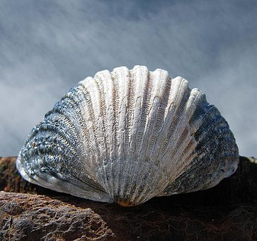 Macro, Abstract, Texture, Shell, Sky