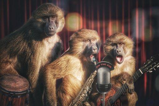 Ape, Monkeys Band, Monkey Gang, Animal, Music, Band