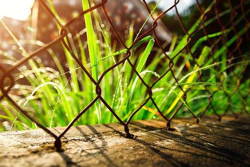 Grass, Dreamy, Nature, Green, Cool, Spring, Sunlight