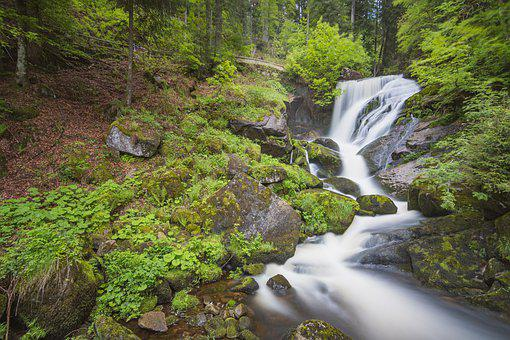 Triberg, Waterfall, Black Forest, Nature, Water, Forest