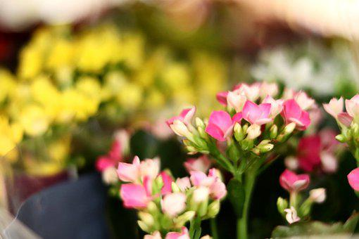 Flores, Cores, Naturalidade, Beleza, Charme, Olá Marcha