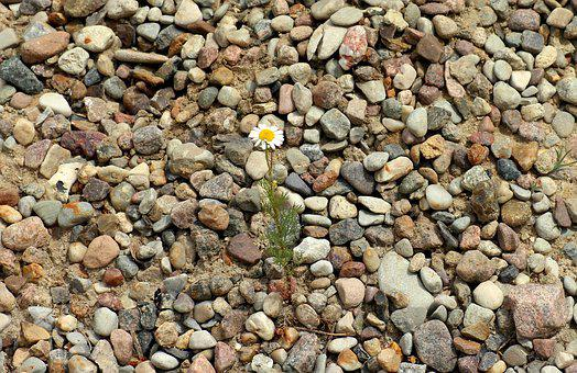 Flower, Pebbles, Pebble, The Background, Texture