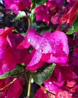 Raindrops, Flowers Nature, Raindrop, Bloom, Plant