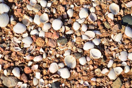 Shells, Sand, Beach, Seashell, Sea, Ocean, Water, Coast