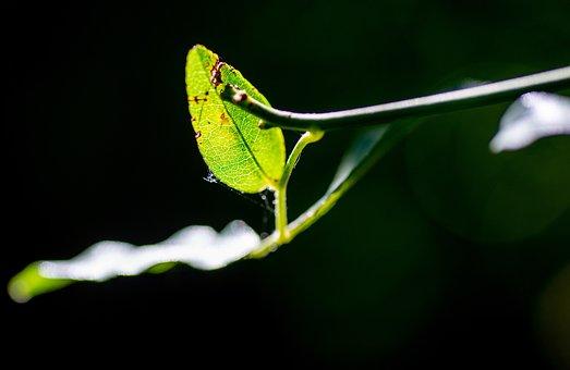 Leaf, Nature, Plant, Shoots