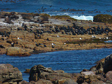 South Africa, Birds, Seagull, Cormorant, Nature, Sea
