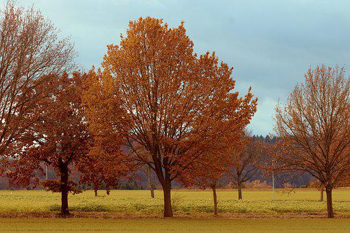 Avenue, Oak, Trees, Meadow, Away, Nature, Autumn