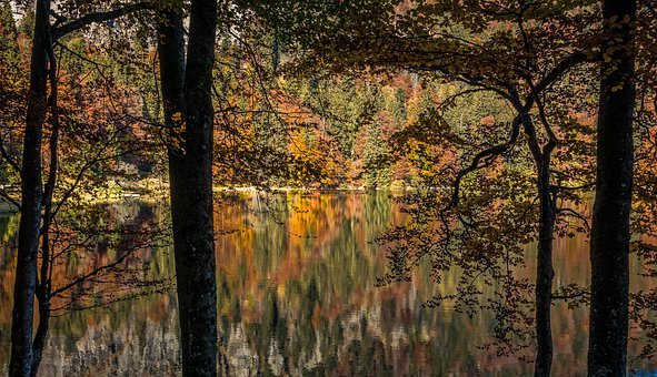 Autumn, Trees, Forest, Nature, Landscape, Leaves, Mood