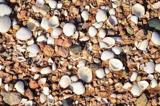 Shells, Sand, Beach, Seashell, Sea, Ocean, Water, Coast