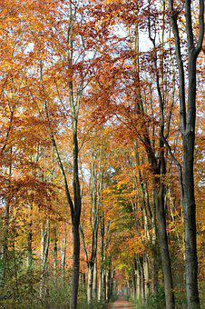 Beukenlaan, Autumn, Fall Colors, Atmosphere, Bright