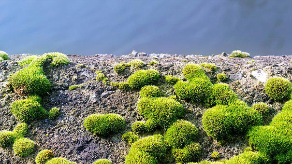 Moss, Green, Almost, Wall, Cement, Concrete, Water