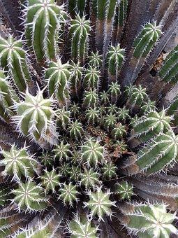 Cactus, Vegetation, Skewers, Green, Zone Arid, Desert