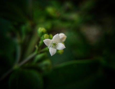 White, Flower, Green, Background, Glory, Glorious