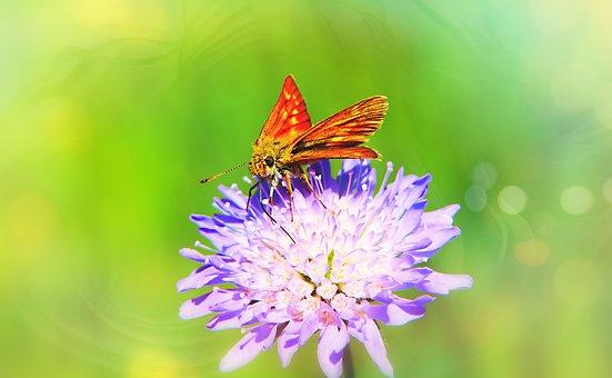 Karłątek Kniejnik, Butterfly Day, Flower, Posts