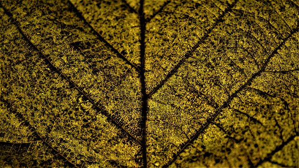 Background, Autumn, Leaf, Nature, Dark, Season, Wet