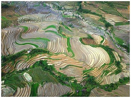Rice Field, Landscape, Mountain, Plan Season