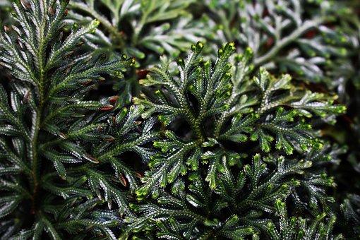 Fern, Leaves, Nature, Environment, Ferns, Plants, Moss