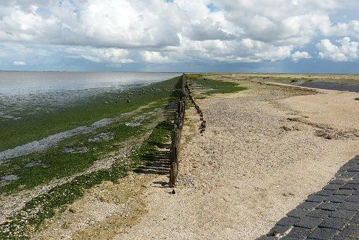 Netherlands, Sea, North Sea, Ebb, Seaweed, Original