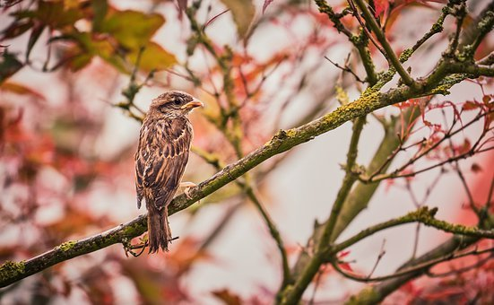 Learn To Fly, Bird, Sparrow, Young Bird, Wet, Plumage