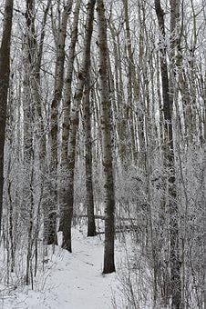 Winter, Path, Woods, Forest, Nature, Trees, Outdoor