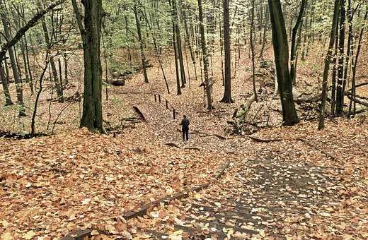 Landscape, Autumn, Forest, Trees, Carpet, Leaves, Dry