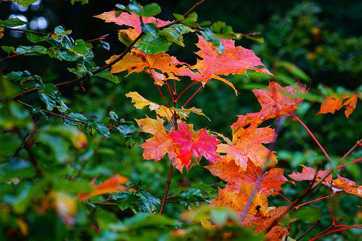 Leaves, Tree, Nature, Forest, Autumn, Green