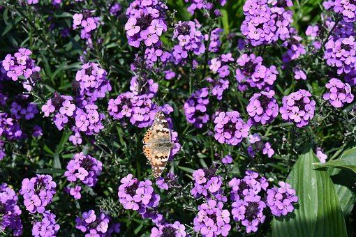 Monarch, Butterfly, Sterling Castle, Garden