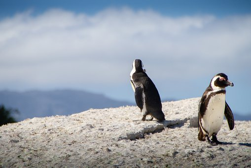 Penguins, South Africa, Cape Town, Travel, Sky, Nature