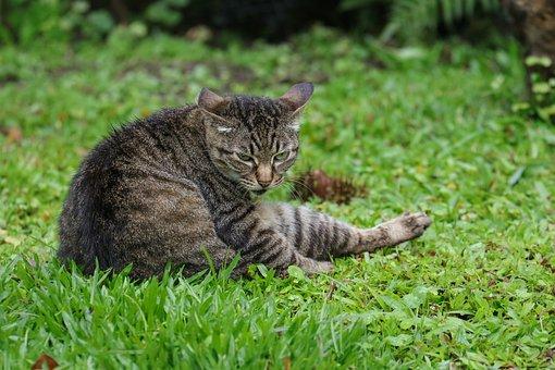 Cat, Animal, Wildcat