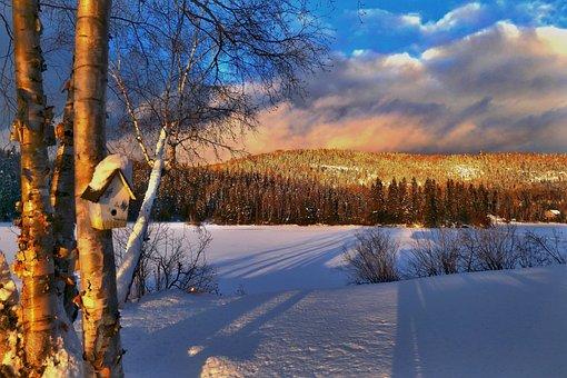 Landscape, Nature, Winter, Cold, Trees, Birch, Fir