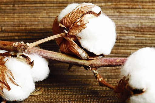Brown, Dry, Faded, Wilting, Wilt, Cotton, Plant, Nature