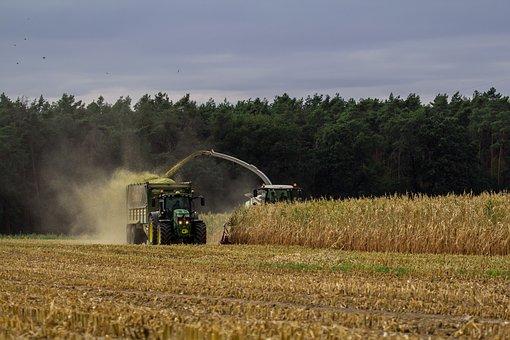 Farmer, Agriculture, Farm, Countryside, Harvest, Corn