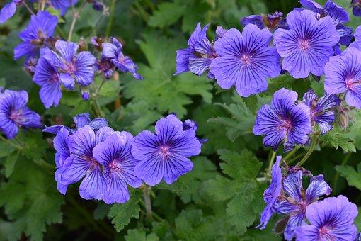 Flowers, Sterling Castle, Gardens, Green Castle
