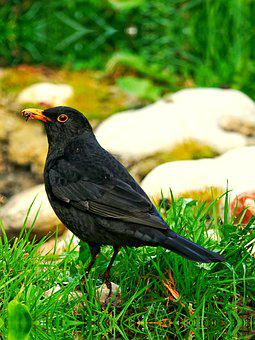 Green, Nature, Black, Bird, Bangladesh