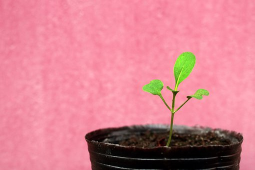 Seeds, Plant, Growth, Nature, Farm, Agriculture