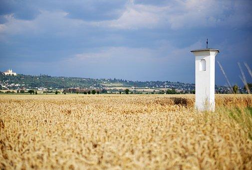 Hlusovice, Hlušovice, Landscape, Field, Wheat, Nature