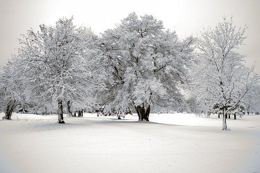 Snow, First Snowfall, Snowfall, Winter, Frost, Nature