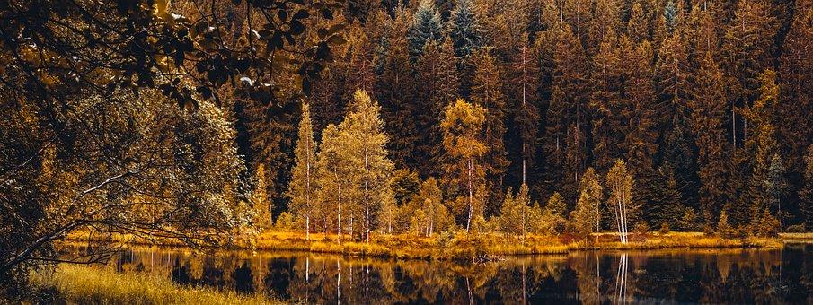 Trees, Landscape, Nature, Wood, Fall, Environment